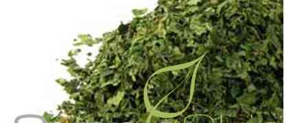 Nettle leaf- benefits, origins and uses